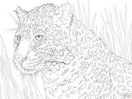 Jaguar Portre Kleurplaat Gratis Kleurplaten Printen