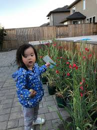 """wentao zhang on Twitter: """"My little boss instructed her postdoc how to do  wheat work,… """""""