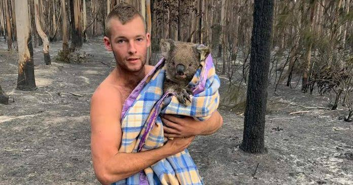 Image result for australia fire koala bear