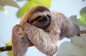 create meme three toed sloths sloth