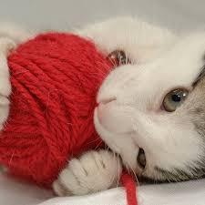 cats wool and how to stop