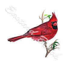 Cardinal Grosbeak Red Male Bird Vinyl Decal Sticker Auto Car Rv Camper Window Ebay