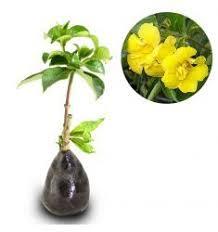 gambar tanaman merambat bunga terbaik tanaman petani dan