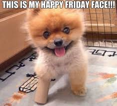 this is my happy friday face humordog