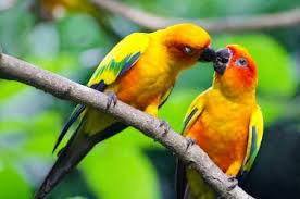cute love bird colorful parrot hd