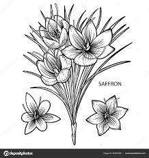 Afbeelding Saffraan Bloemen Stockvector C Homunkulus28 191007300