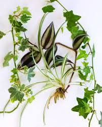 plants for your hanging water garden