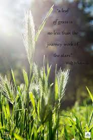 i believe a leaf of grass is no less than the journey work of the