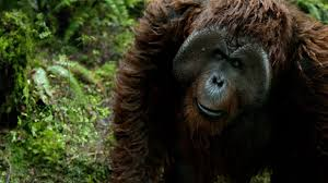 The War - Il Pianeta delle Scimmie: capiamo meglio il ruolo di Maurice