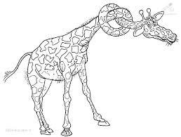 1001 Kleurplaten Dieren Giraffe Kleurplaat Giraffe