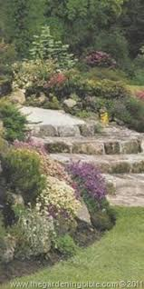 edging plants and rock garden plants