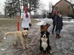Dog Attack Sparks Discussion On Efficacy Of Invisible Fences New Canaan Ct Patch