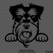 Peeking Schnauzer Puppy Cute Dog Car Truck Vinyl Decal Sticker Choose Color 4 95 Picclick