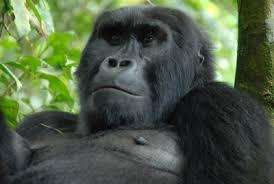 Wild Frontiers | Uganda - Wild Frontiers