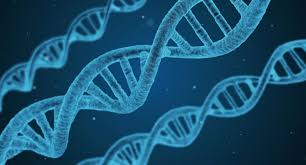 Image result for dna copyleft pictures