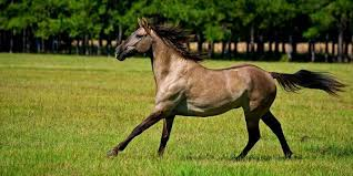 10 of the world s best horse breeds