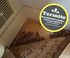 24+ Termite Control Cost  Pictures