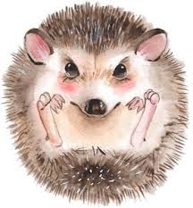 Adorable Happy Watercolor Art Curled Hedgehog Vinyl Decal Sticker Shinobi Stickers