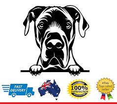 Great Dane Peeking Dog Car Decal Vinyl Sticker Ebay