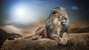 majestic lion wallpaper 760