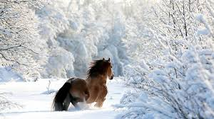 خواطر عن الثلج عبارات عن البرد والثلج احاسيس بريئة