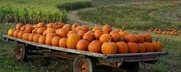 hd pumpkin patch autumn for