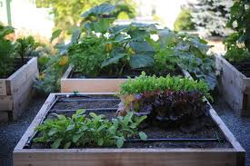 drip irrigation q a seattle urban
