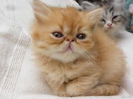 أروع صور قطط مضحكة مشاكسة حزينة حنونة شمس مشرقة
