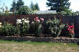 Garden Updates Off The Cuff Rose Bush Container Herb Garden Lawn And Garden