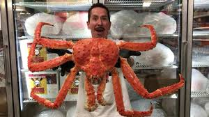 Our giant Alaskan King Crab just flew ...