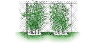 Vertical Garden Ideas Different Types Of Planters And Support