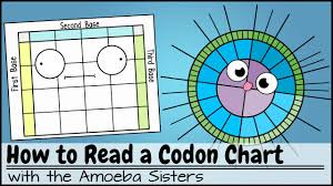 How to Read a Codon Chart - YouTube