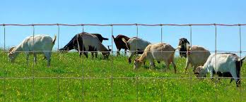 Red Brand Sheep And Goat Fence Fencing From Moncaster Wire Products Wholesale Suppliers Of Wire Fencing And Mesh
