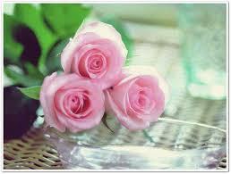 ورد صور الورد للرومانسيه والجمال روشه