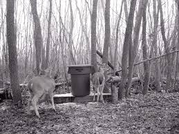 homemade feeders and feeding deer
