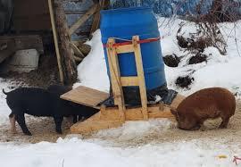 how to build a portable pig feeder