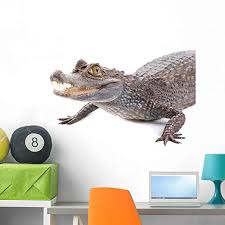 Amazon Com Wallmonkeys Alligator Wall Decal Peel And Stick Animal Graphics 36 In W X 24 In H Wm153490 Home Kitchen