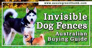 Invisible Dog Fences Australian Buying Guide Agt