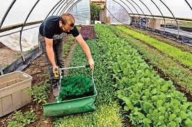 urban backyard farming for profit