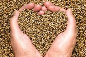 organic hemp seeds un hulled truly