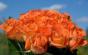 اروع صور الورد بالون البرتقالى Hd