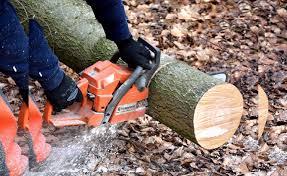 stump removal rockville md