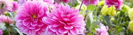 Spring-Planted, Summer-Blooming Bulbs | American Meadows