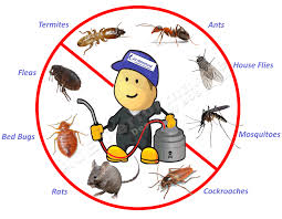 Opt For Finding The Right Gold Coast Pest Control Services - Mini Home  Tricks