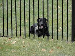 Fencing Keeps Dogs Safe Dog Safe Classic Fence Dog Fence