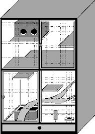 beginner info 2 chinchilla stuff