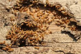 17+ Different Termites  Background