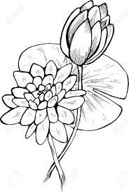 white flower ilration