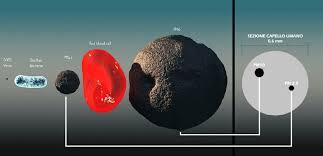 Coronavirus Covide-19 quanto è grande?