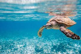 africa turtle nature blue sea s